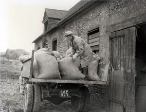 A member of the Women's Land Army loading sacks on a trailer, c1940
